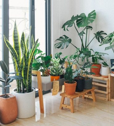 Top Tips To Going Green